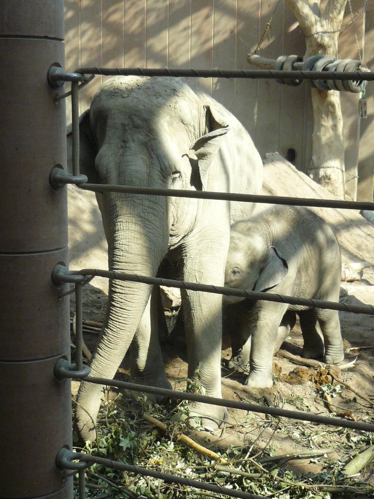 13-Zoo-Elefantes