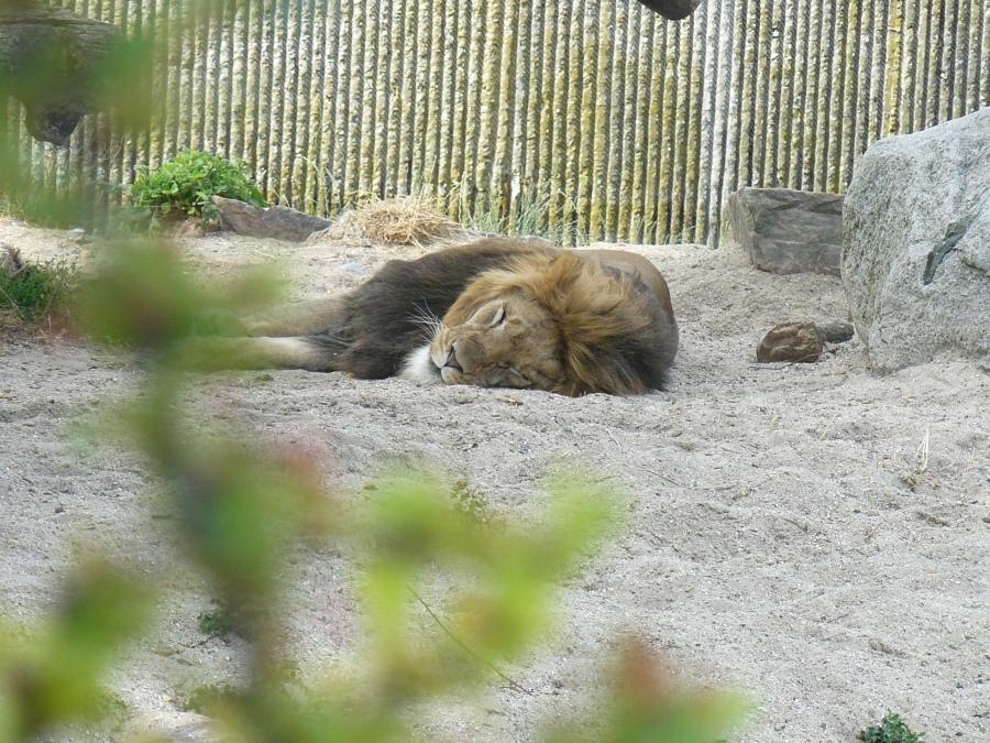 13-Zoo-Leon